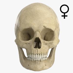 3d caucasoid female skull model