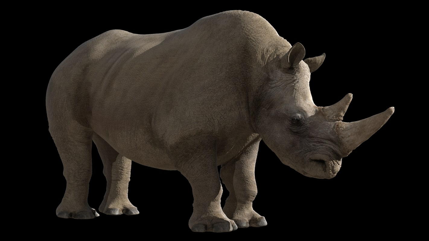 rhinocerose 3d model