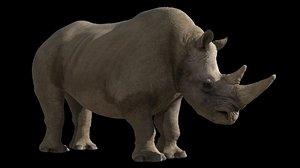 rhinocerose 3d model