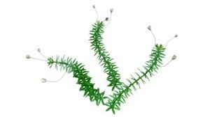 obj hydrilla aquatic plant