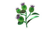 hyoscyamus plants 3d obj