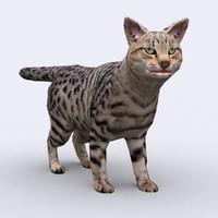 3DRT - Cat