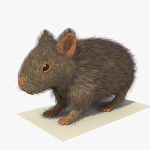 3d model grey hamster fur