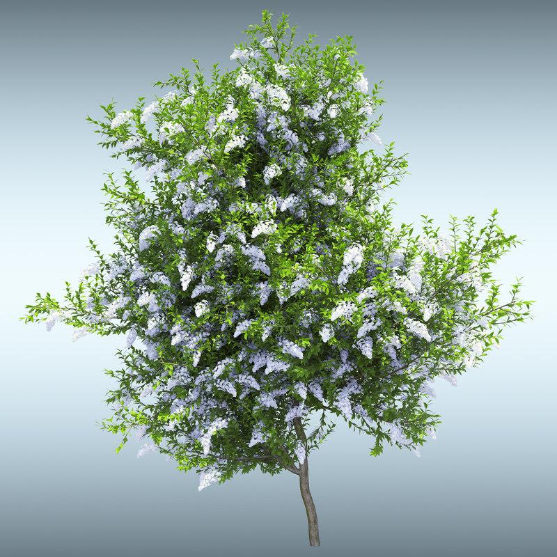 tree leaves 3d max