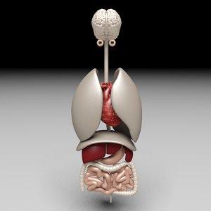3dsmax human anatomy