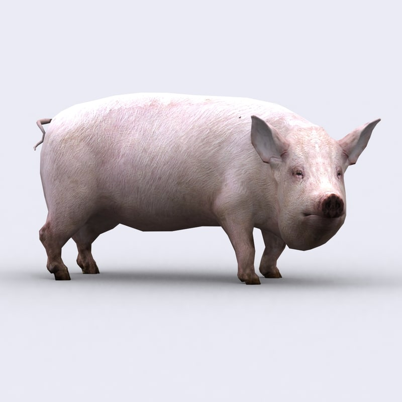 3d model - pig animations