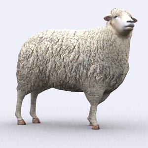 3d model - sheep