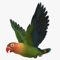 """Agapornis Fischeri """"Fischer's Lovebird"""