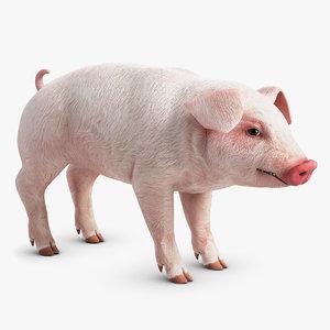 pig pork 3d model