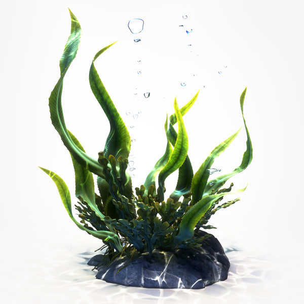 3d model seaweeds animation