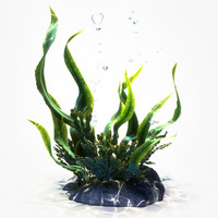 Seaweed Animated