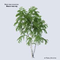Birch tree 03
