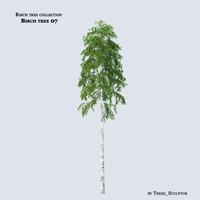 Birch tree 07