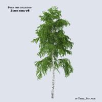 Birch tree 08