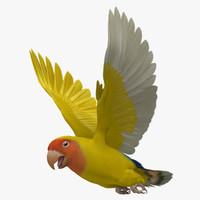 """Agapornis Roseicollis """"Lutino Rosy-Faced Lovebird"""