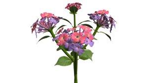 lantana flowering 3d model