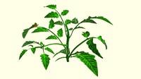 leaf curl obj