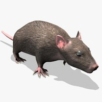 rat rigged animation 3d model