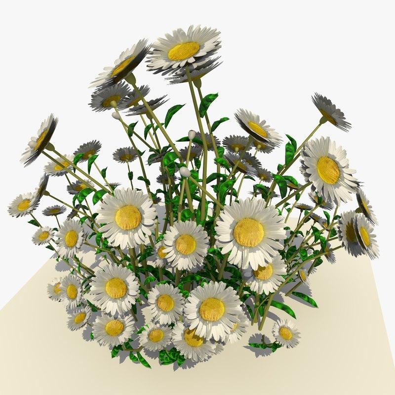 white daisy flowers 3d model
