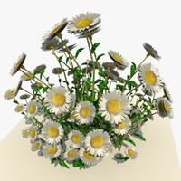 white daisy flowers 3d model