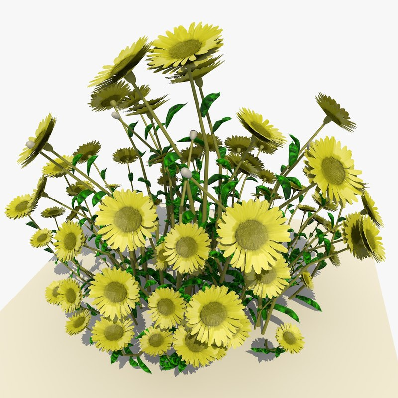 yellow daisy flowers 3d model
