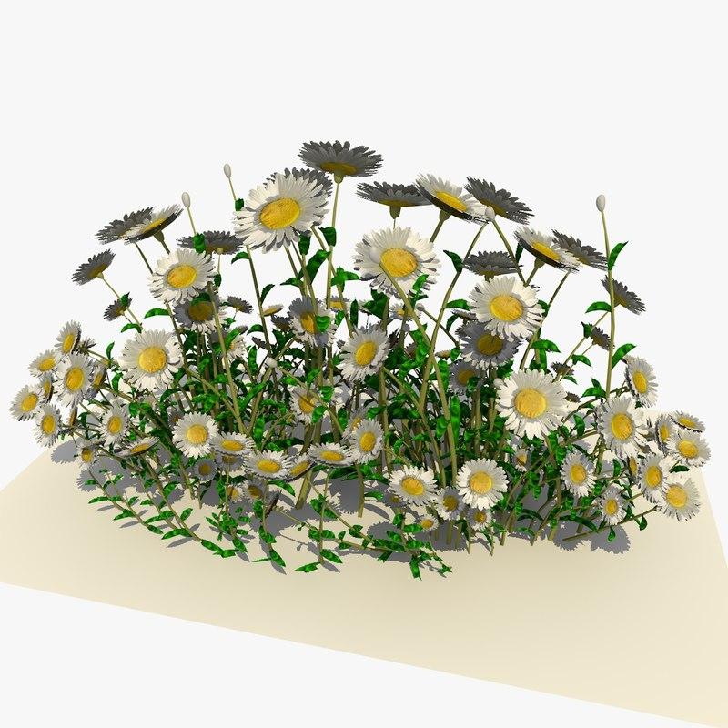3d model of white daisy flowers