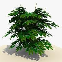maya plant bush