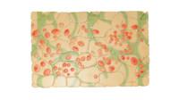 leucoplasts plastid organelles obj