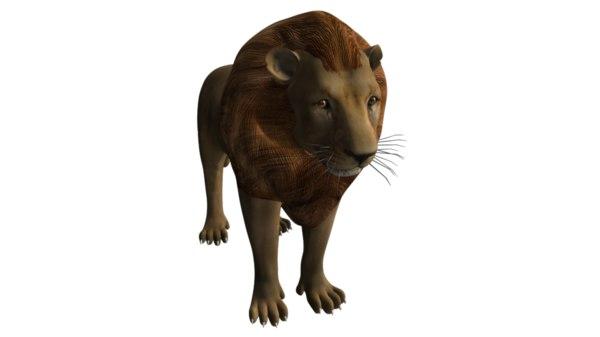3d lion big cats