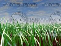 3d grass scene sky model