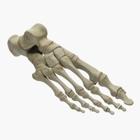 3d foot skeleton