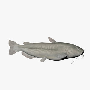 channel catfish fish 3d model