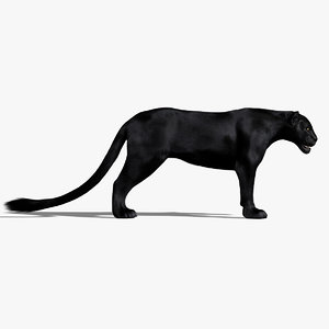 3d black panther fur animation