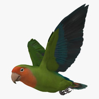 "Agapornis Roseicollis ""Peach Faced Wild Green Lovebird"