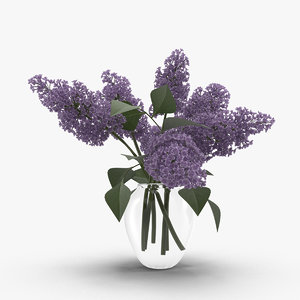 lilac flowers ma