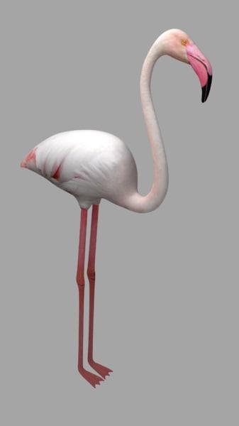 blend flamingo