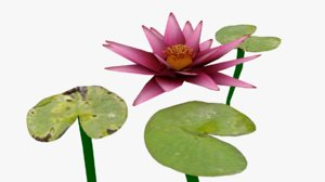 waterlilly lilly wa 3d model