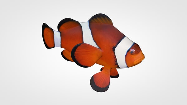 cinema4d anemonefish nemo
