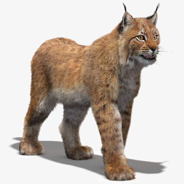 max eurasian lynx fur rigging animation