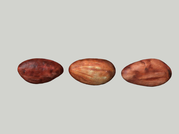 3d cacao beans model