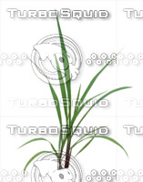 Plant set 003