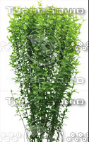 Plant set 007