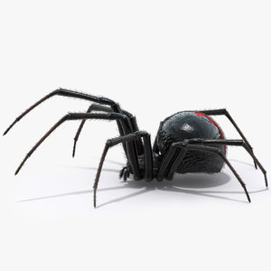 black widow spider 3d model
