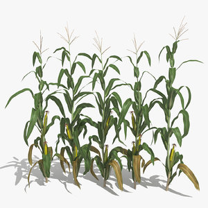 3d corn stalks model