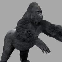 Gorilla-Maya