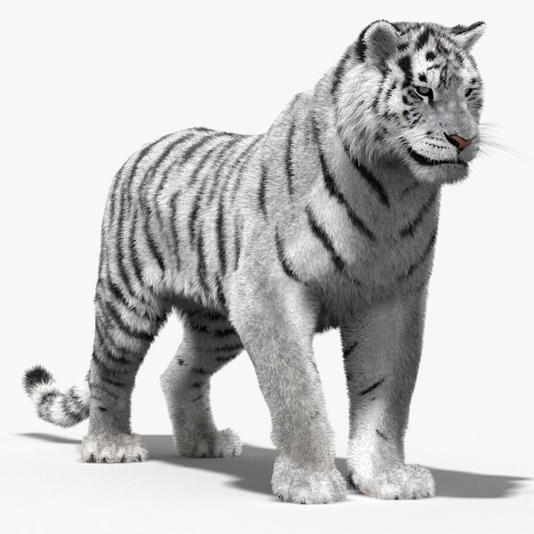 max tiger white rigged cat