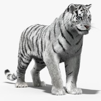 Tiger White (Rigged, Fur)
