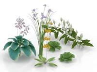 max flowers plants garden