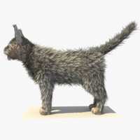 grey cat fur 3d model