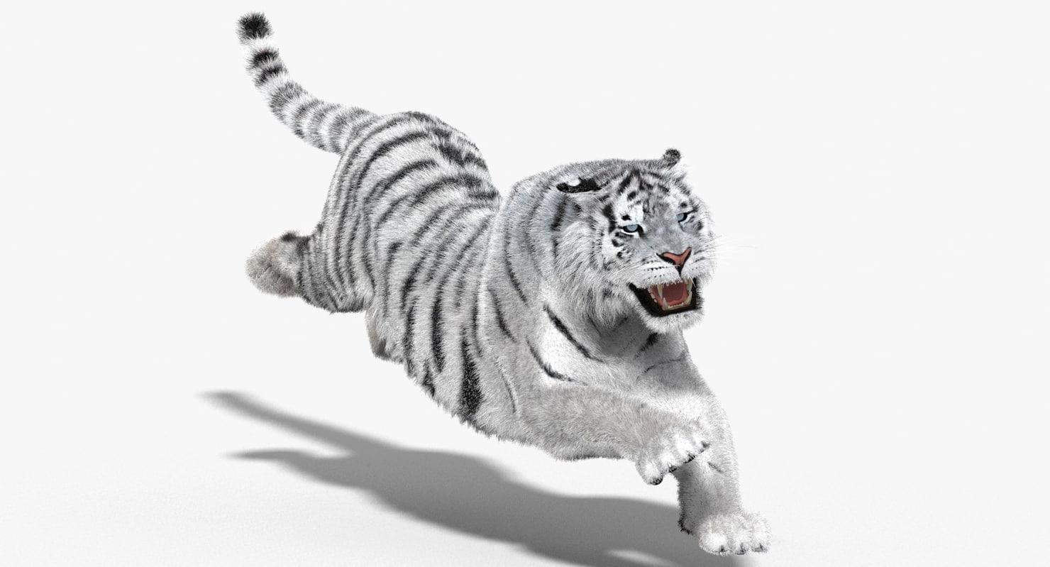 Tiger-White-3d-Model-00.jpg